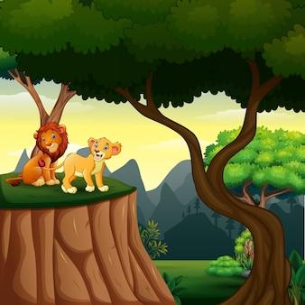 Cena da floresta com leões no penhasco