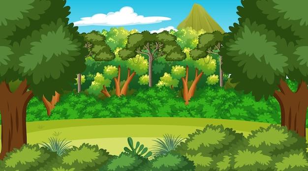Cena da floresta com várias árvores da floresta Vetor grátis