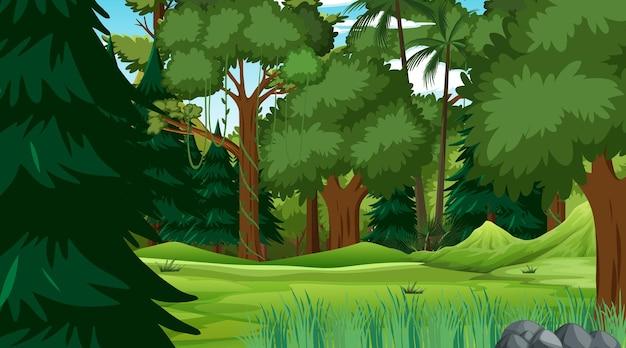 Cena da floresta com várias árvores da floresta