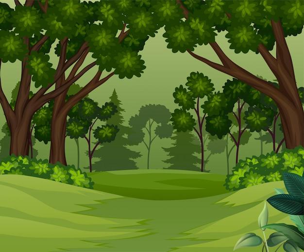 Cena da floresta profunda com fundo de árvores