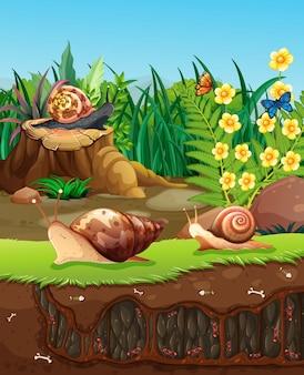 Cena da natureza com caracóis rastejando no jardim