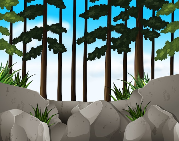Cena da natureza com céu azul na floresta