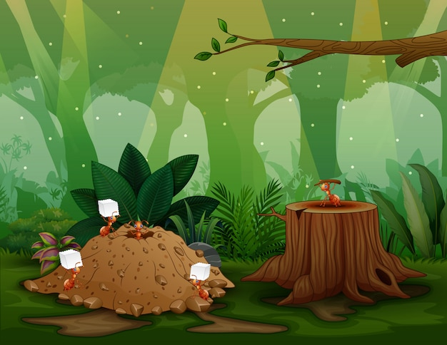 Cena da natureza com colônia de formigas