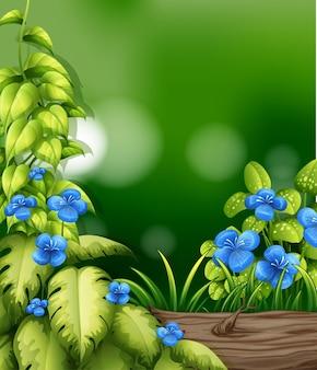 Cena da natureza com flor azul no jardim
