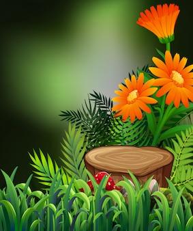 Cena da natureza com flores alaranjadas e samambaias