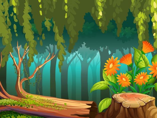 Cena da natureza com flores na floresta