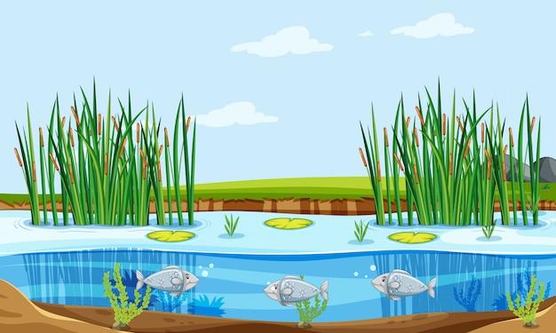 Cena da natureza da lagoa de peixes