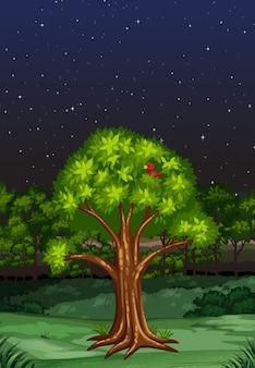 Cena da natureza durante a noite
