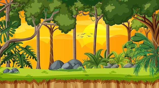 Cena da paisagem da floresta ao pôr do sol com muitas árvores diferentes