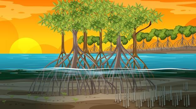 Cena da paisagem da floresta de mangue no horário do pôr do sol