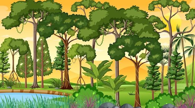 Cena da paisagem da floresta na hora do pôr do sol com muitas árvores diferentes