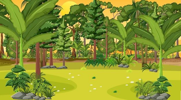 Cena da paisagem da floresta na hora do pôr do sol