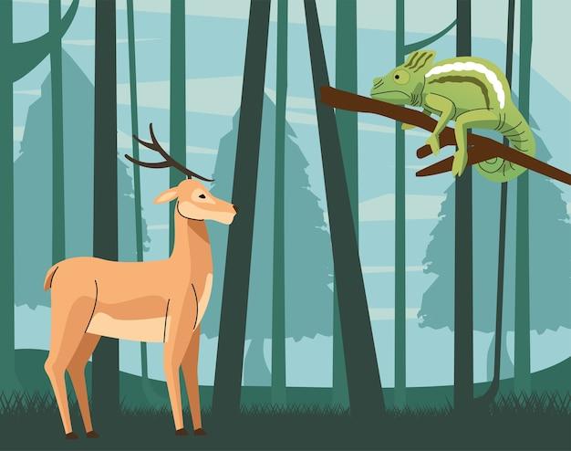 Cena de camaleão selvagem e animais renas
