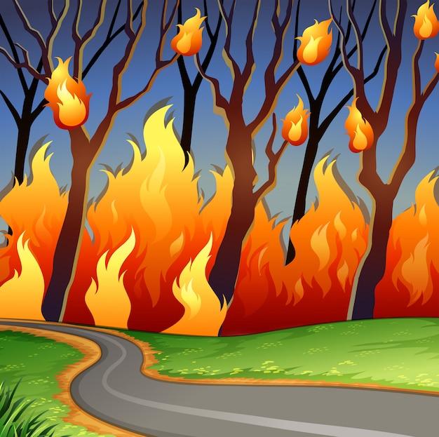 Cena de desastre de fogo de floresta