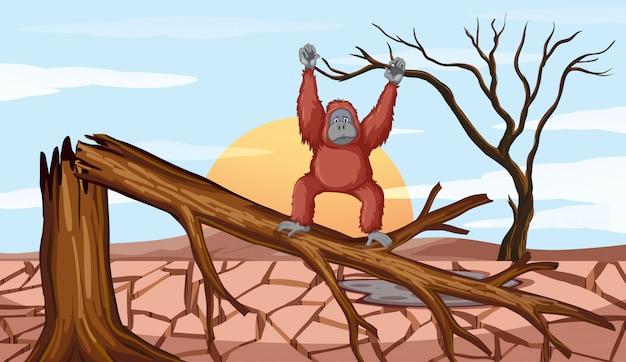 Cena de desmatamento com chimpanzé
