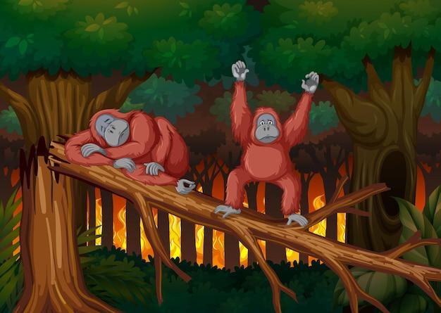 Cena de desmatamento com dois macacos