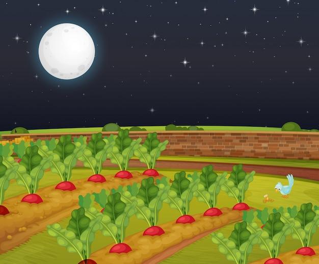Cena de fazenda cenoura com lua grande à noite
