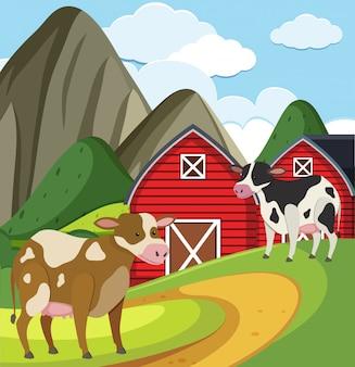 Cena de fazenda com duas vacas e celeiros vermelhos na fazenda