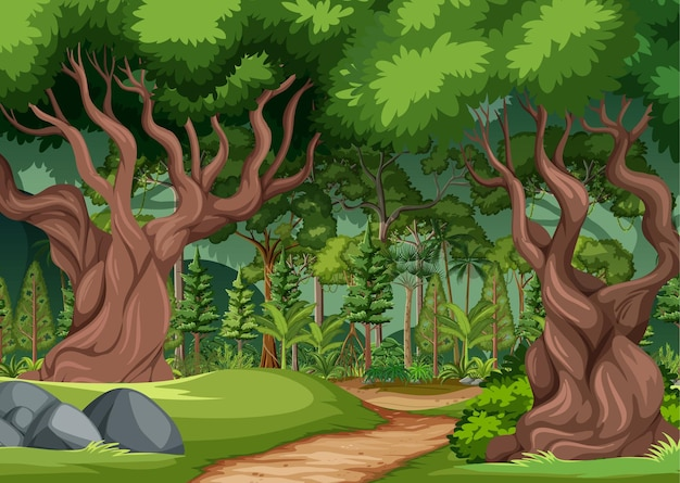 Cena de floresta com trilha de caminhada e muitas árvores