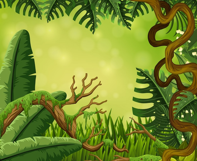 Cena de fundo com árvores na floresta