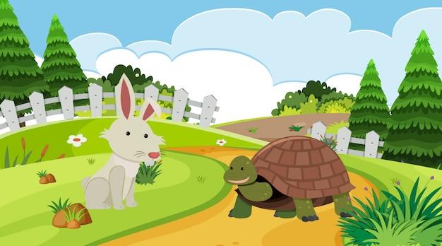 Cena de fundo com coelho e tartaruga