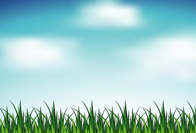 Cena de fundo com grama verde e céu azul