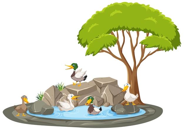 Cena de lagoa isolada com muitos patos