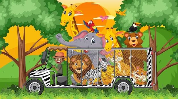 Cena de safári com animais selvagens no carro-gaiola