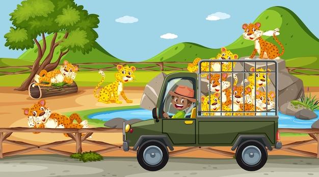 Cena de safári com crianças em carro de turismo observando grupo de leopardos