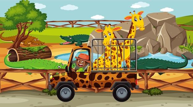 Cena de safári com muitas girafas em um carro gaiola