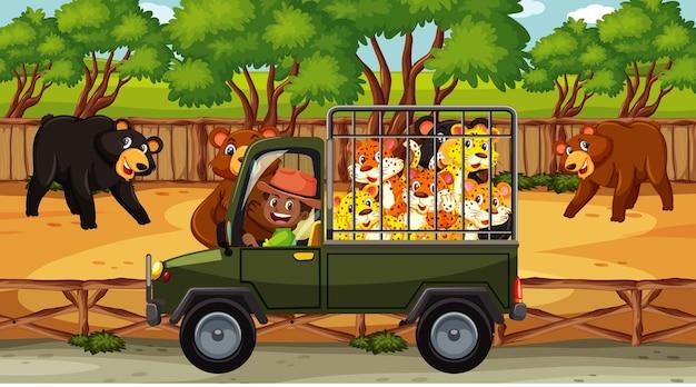 Cena de safári com muitos ursos e leopardo no carro gaiola