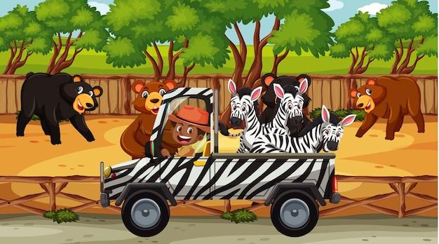 Cena de safári com muitos ursos e zebras no caminhão