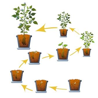 Cena do conceito de crescimento