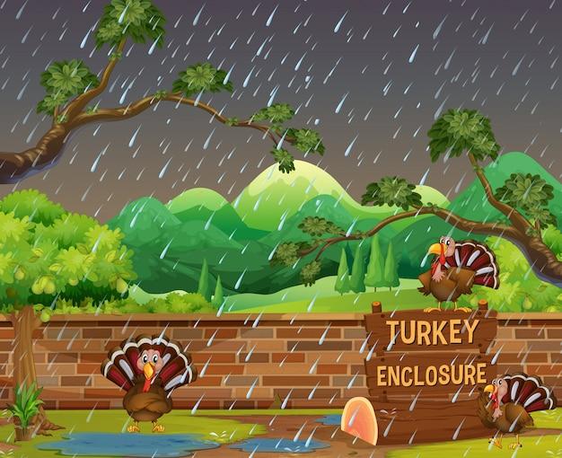 Cena do jardim zoológico com perus na chuva