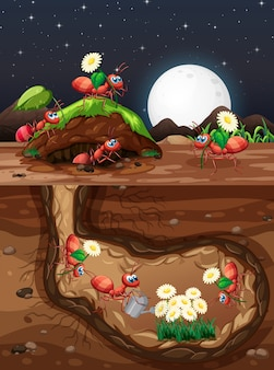 Cena subterrânea com formigas no buraco à noite