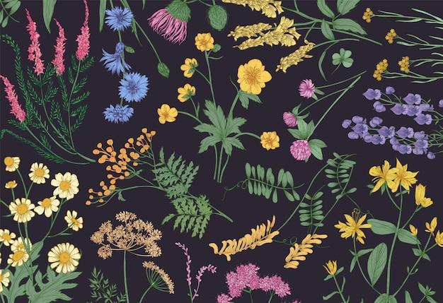 Cenário horizontal botânico com flores silvestres desabrochando, ervas floridas de prado de verão e lindas plantas herbáceas em fundo preto. ilustração em vetor floral realista natural desenhada