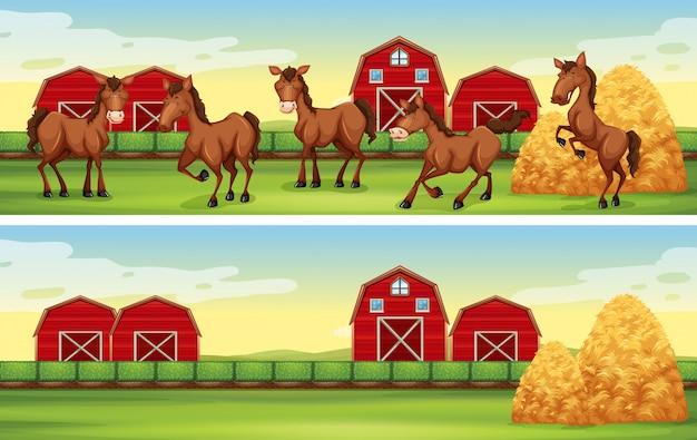 Cenas da fazenda com cavalos e celeiros