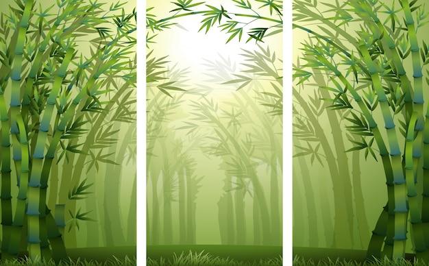 Cenas da floresta de bambu com névoa