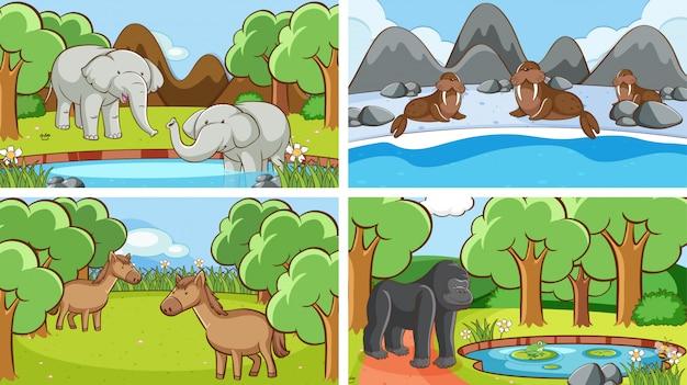 Cenas de fundo de animais em estado selvagem
