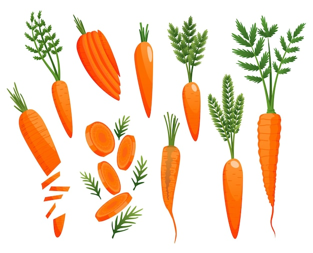Cenoura. raízes de laranja, topos de cenoura verde. desenho vetorial de vegetais. vegetal fresco dos desenhos animados, isolado no fundo branco.
