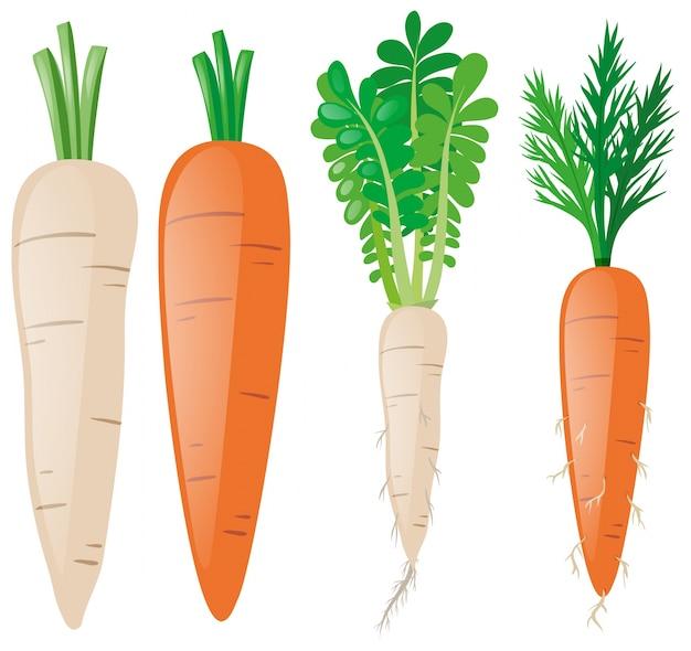 Cenouras em diferentes formas