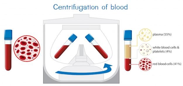 Centrifugação do diagrama de sangue
