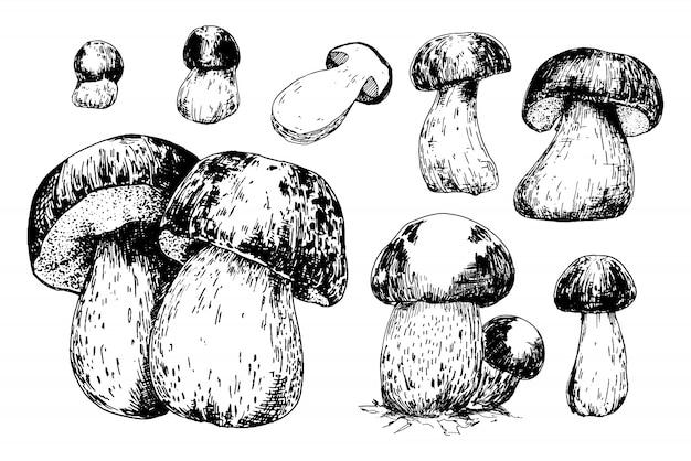 Cep cogumelos esboçar conjunto