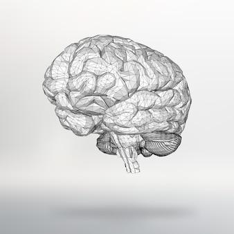 Cérebro humano de ilustração vetorial. a grade estrutural de polígonos. fundo abstrato do vetor do conceito criativo. estrutura molecular. brochura e papel timbrado de estilo de desenho poligonal.