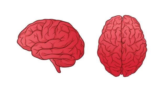 Cérebro humano desenhado de mão