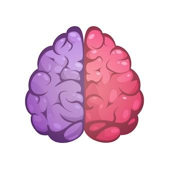 Cérebro humano, dois, diferente, colorido, simbólico, esquerda, e, direita hemisférios cerebrais, modelo, imagem, ícone, abst