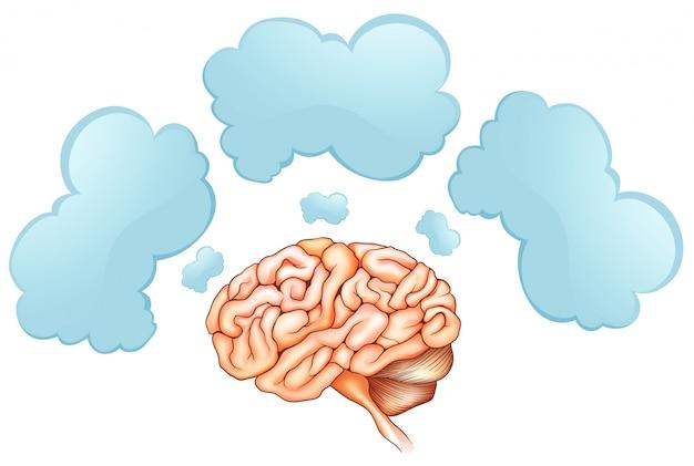 Cérebro humano e três bolhas de discurso