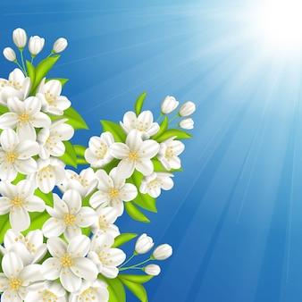 Cereja florescendo