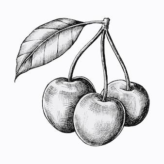 Cerejas frescas desenhadas à mão