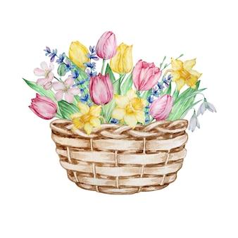 Cesta de vime com tulipas isoladas em branco Vetor Premium